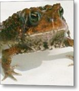 The Whole Toad Metal Print