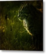 The Wild Cat Metal Print