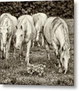 The Wild Horses Of Shannon County Mo 7r2_dsc1111_16-09-23 Metal Print