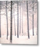 The Winter Forest Metal Print