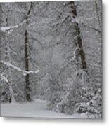 The Winter Path Metal Print