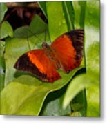 The Wizard Butterfly Metal Print
