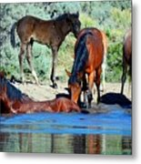 The Wonder Of It All Metal Print by Jeanne  Bencich-Nations