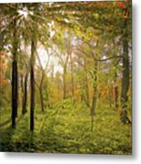 The Woods Metal Print