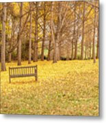 The Yellow Leaves Of Fall Carpet The Ground Of A Ginkgo Biloba Grove. Cm3 Metal Print