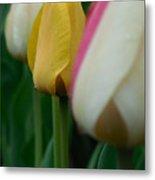 The Yellow Tulip Metal Print