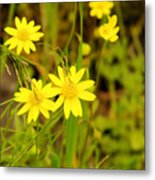 Thee Yellow Smiles  Metal Print