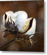 Them Cotton Bolls Metal Print