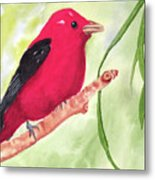 Theodore Tanager Metal Print