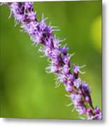 There You Are Blazing Star Metal Print