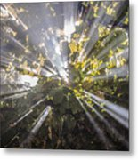 Therefrom Metal Print