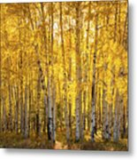 There's Gold In Them Woods  Metal Print