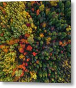 These Are Trees Metal Print
