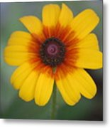 They Call Me Mellow Yellow. Metal Print