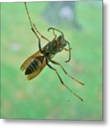 Thin Waisted Wasp On Door Glass     October  Indiana Metal Print