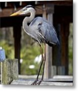 Thinking About Lunch Metal Print