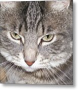 Thinking Holly The Cat Metal Print