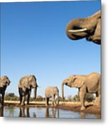 Thirsty Elephants Metal Print