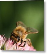 Thirsty For Nectar Metal Print
