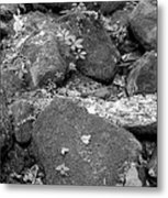 Thirsty For Water Metal Print