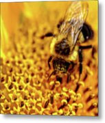 The Bee Is A Little Pig Metal Print
