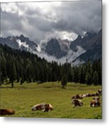 This Is A Cow's World Metal Print