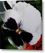 This Is A Purple Pansy Metal Print