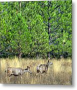 This Is British Columbia 14 - Two And Three Points Metal Print by Paul W Sharpe Aka Wizard of Wonders