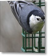 This Is My Suet Metal Print