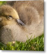 This Little Guy Needs A Nap Metal Print