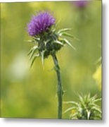 Thistle And Mustard Metal Print