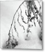 Thistle In Snow Metal Print