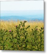Thistle On The Blue Ridge Metal Print