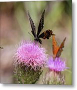 Thistle Pollinators - Large And Small Metal Print