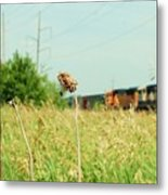 Thistle Rail Metal Print