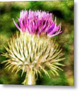 Thistle - The Flower Of Scotland Watercolour Effect. Metal Print