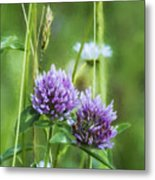 Clover And Daisies Metal Print