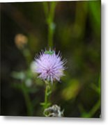 Thistles Morning Dew Metal Print