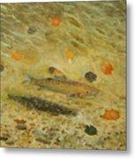 Thorndike Pond Trout Metal Print