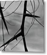 Thorns In Silouette Metal Print
