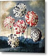 Thornton: Carnations Metal Print