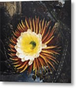 Thornton: Cereus Metal Print