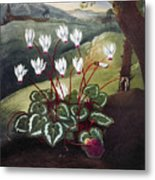 Thornton: Cyclamen Metal Print