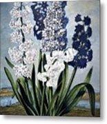 Thornton: Hyacinths Metal Print