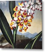 Thornton: Shell Ginger Metal Print