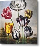 Thornton: Tulips Metal Print