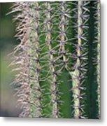 Thorny Cactus Metal Print