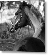 Thoroughbred - Black And White Metal Print