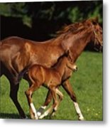 Thoroughbred Chestnut Mare & Foal Metal Print