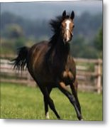 Thoroughbred Horses, Yearlings Metal Print by The Irish Image Collection